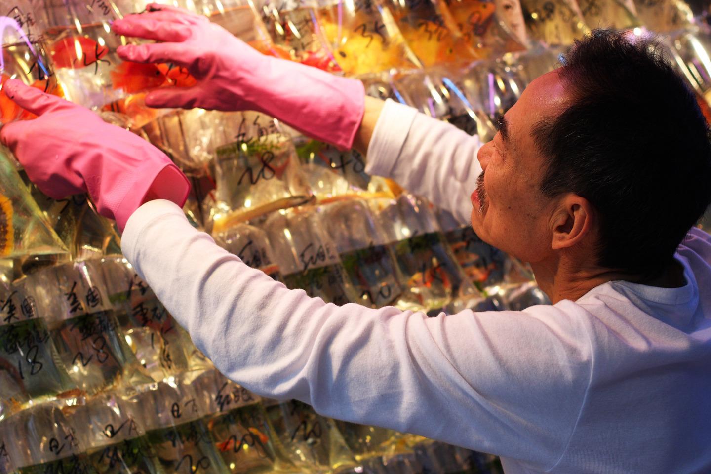 mercado peces hong Kong (1)
