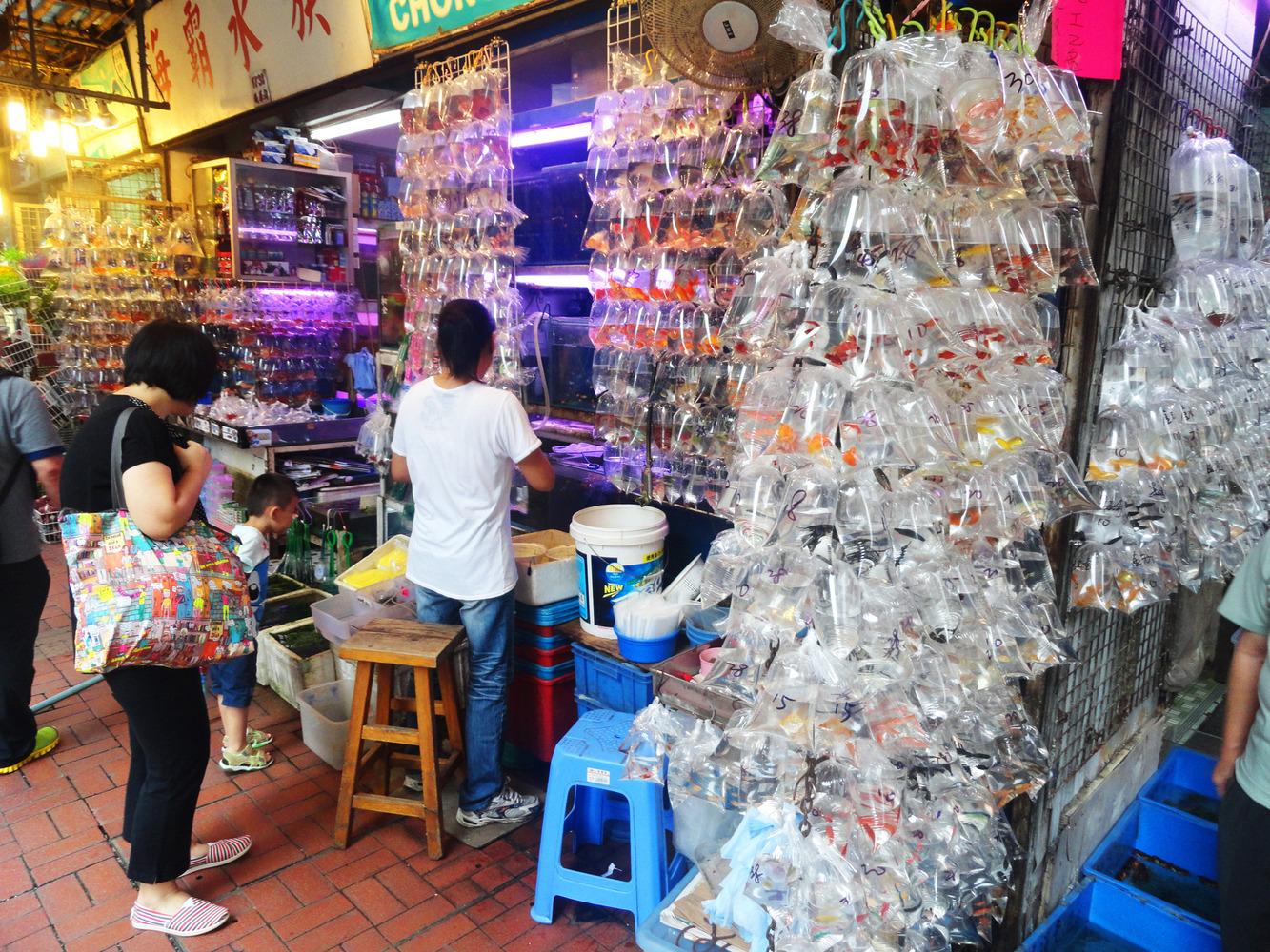 mercado peces hong Kong (10)