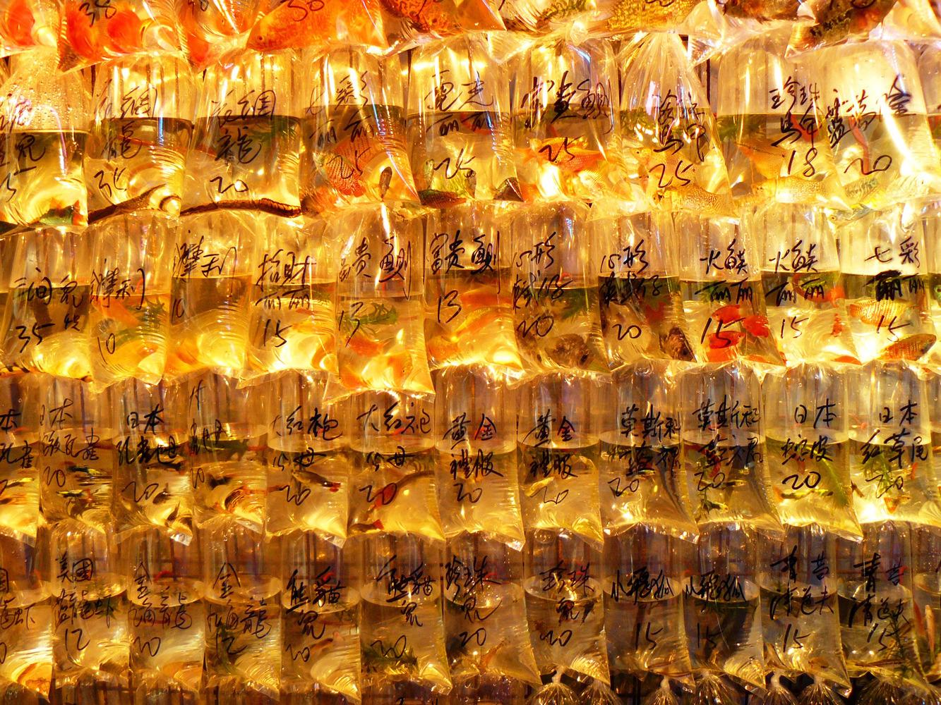 mercado peces hong Kong (11)