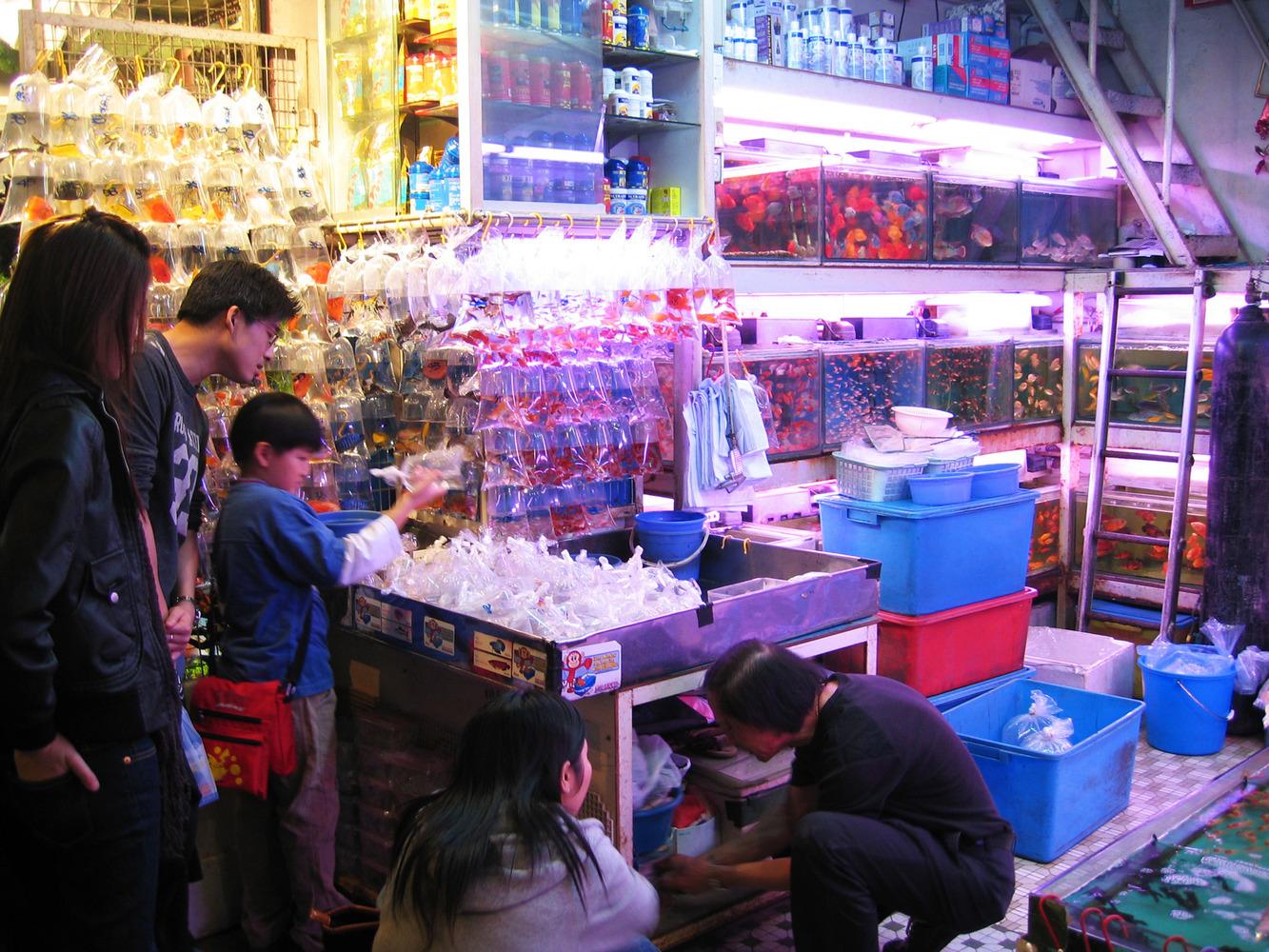 mercado peces hong Kong (3)