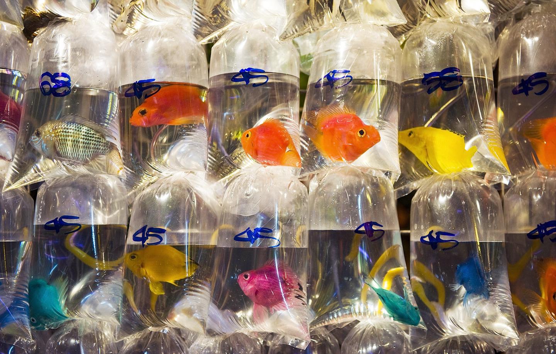 mercado peces hong Kong (4)
