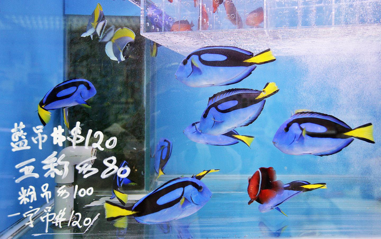 mercado peces hong Kong (5)