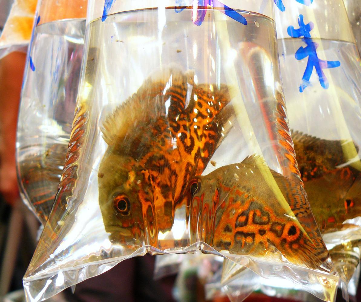 mercado peces hong Kong (6)
