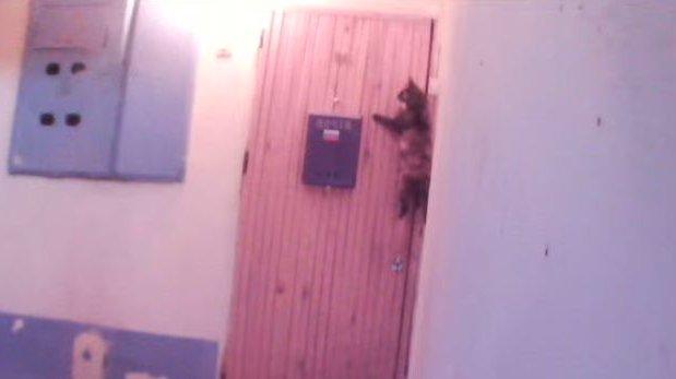 rusia gato toca tmbre