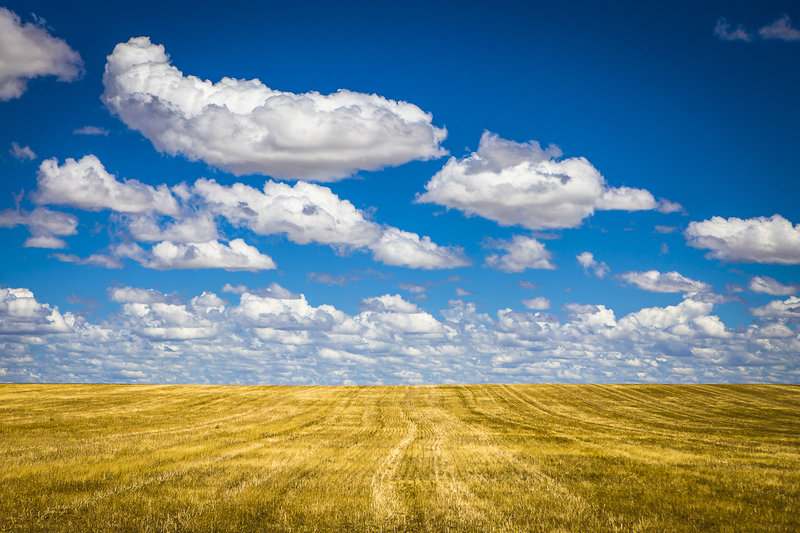 A fair weather cumulus field over a field