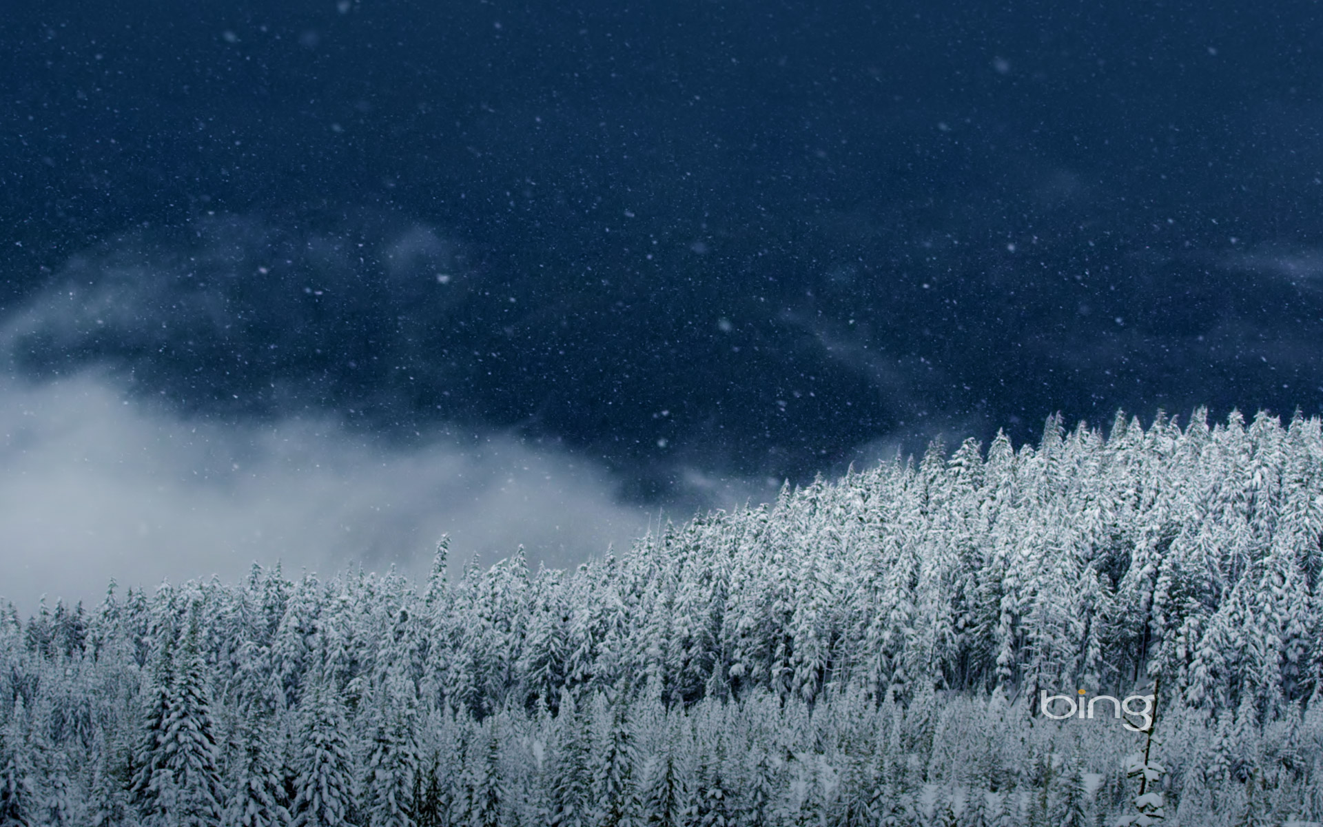 Snowing on trees in Squamish, B.C., Canada