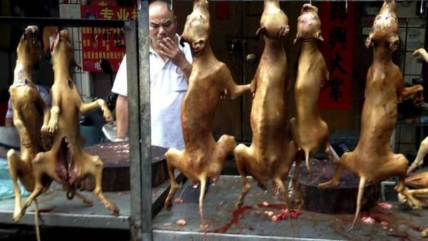 perros-cocinados-exhibidos-feria-Yulin