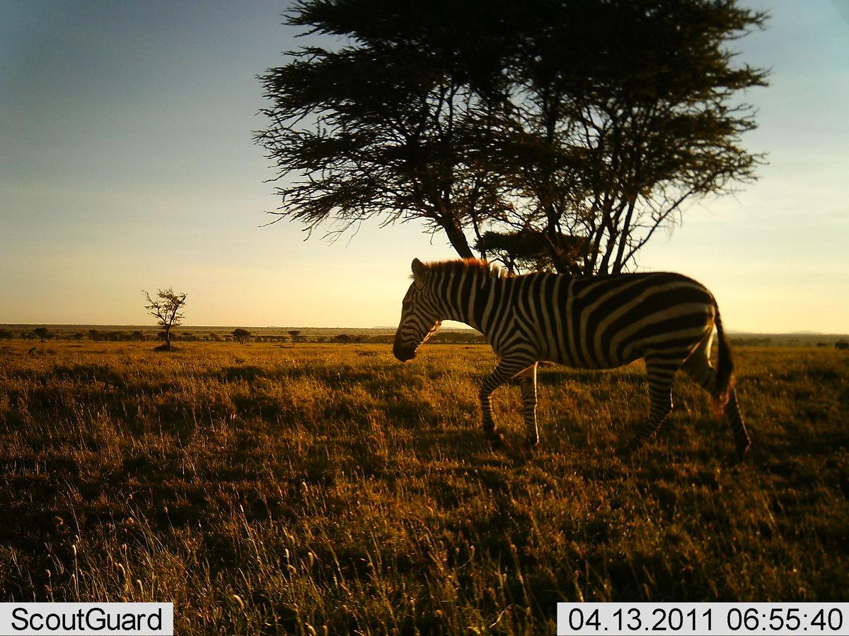 Reserva Africa 13