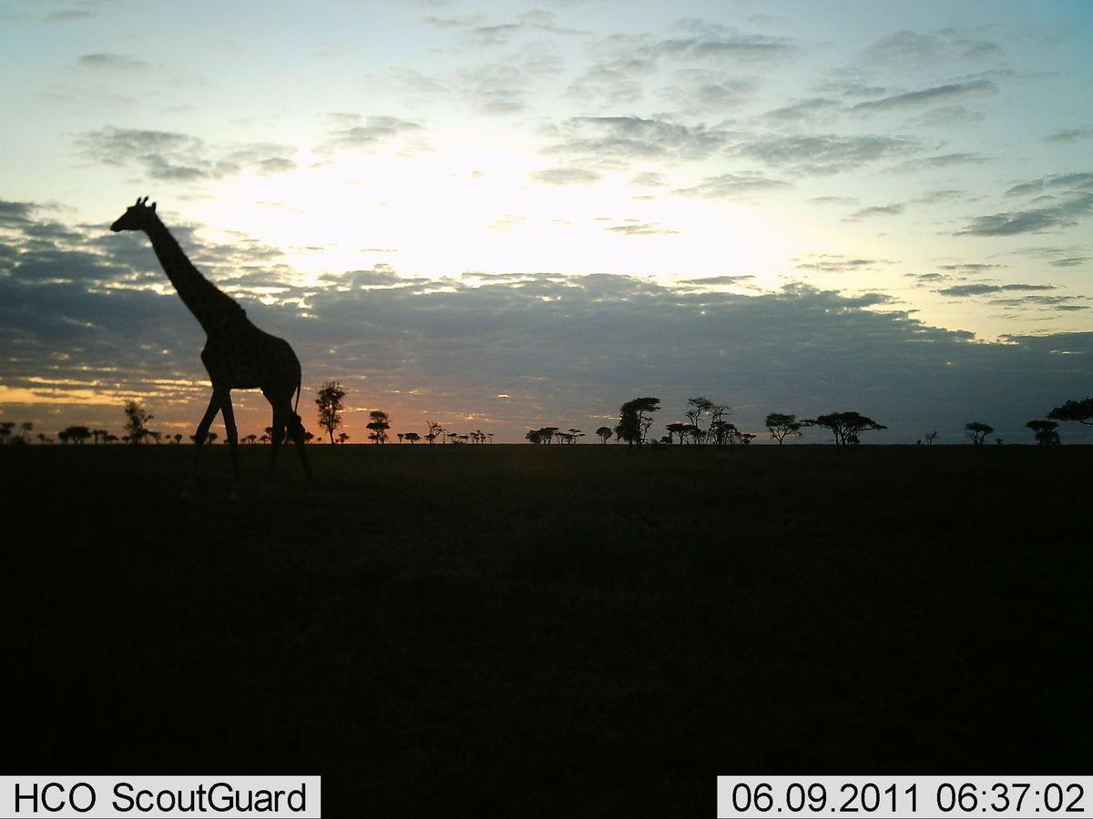 Reserva Africa 14