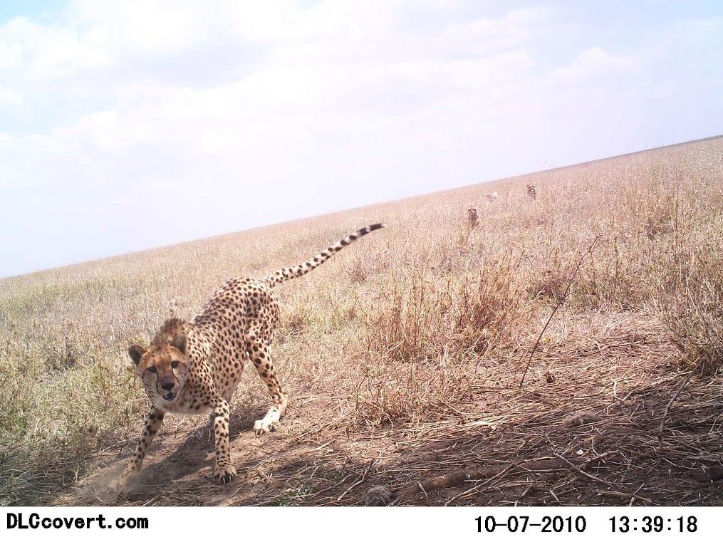 Reserva Africa 15