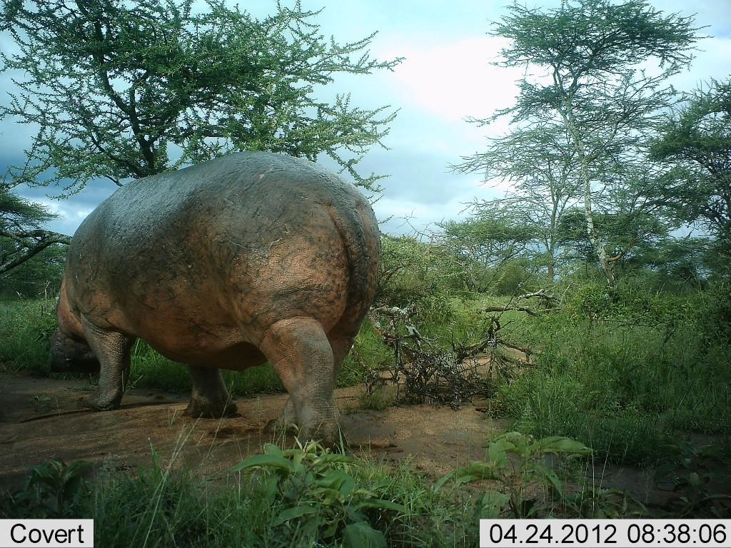 Reserva Africa 16