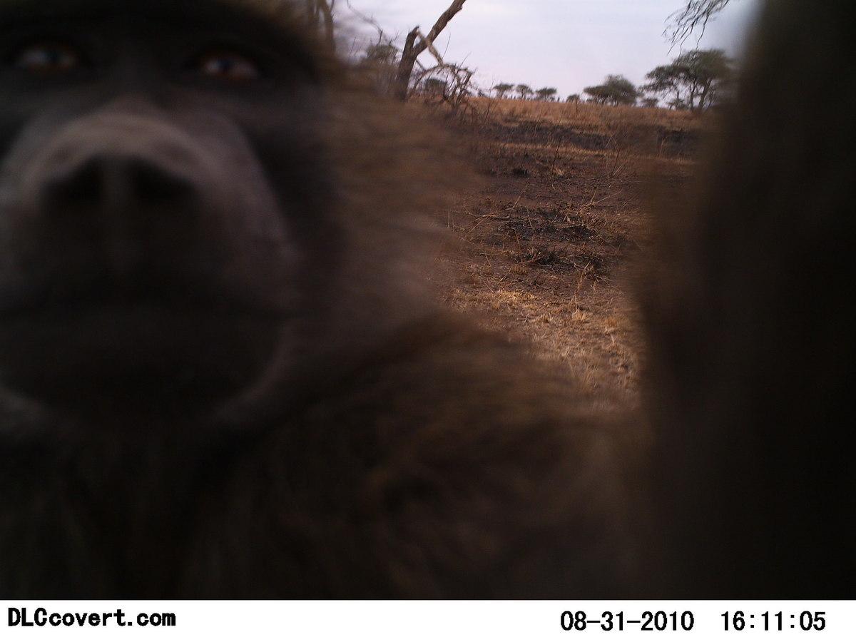 Reserva Africa 6