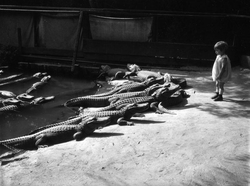 cocodrilo zoologico (2)