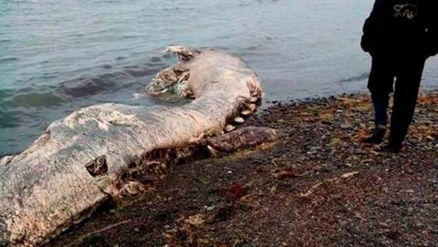 criatura marina rusia 02