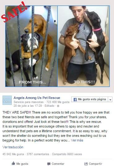 perros a salvo