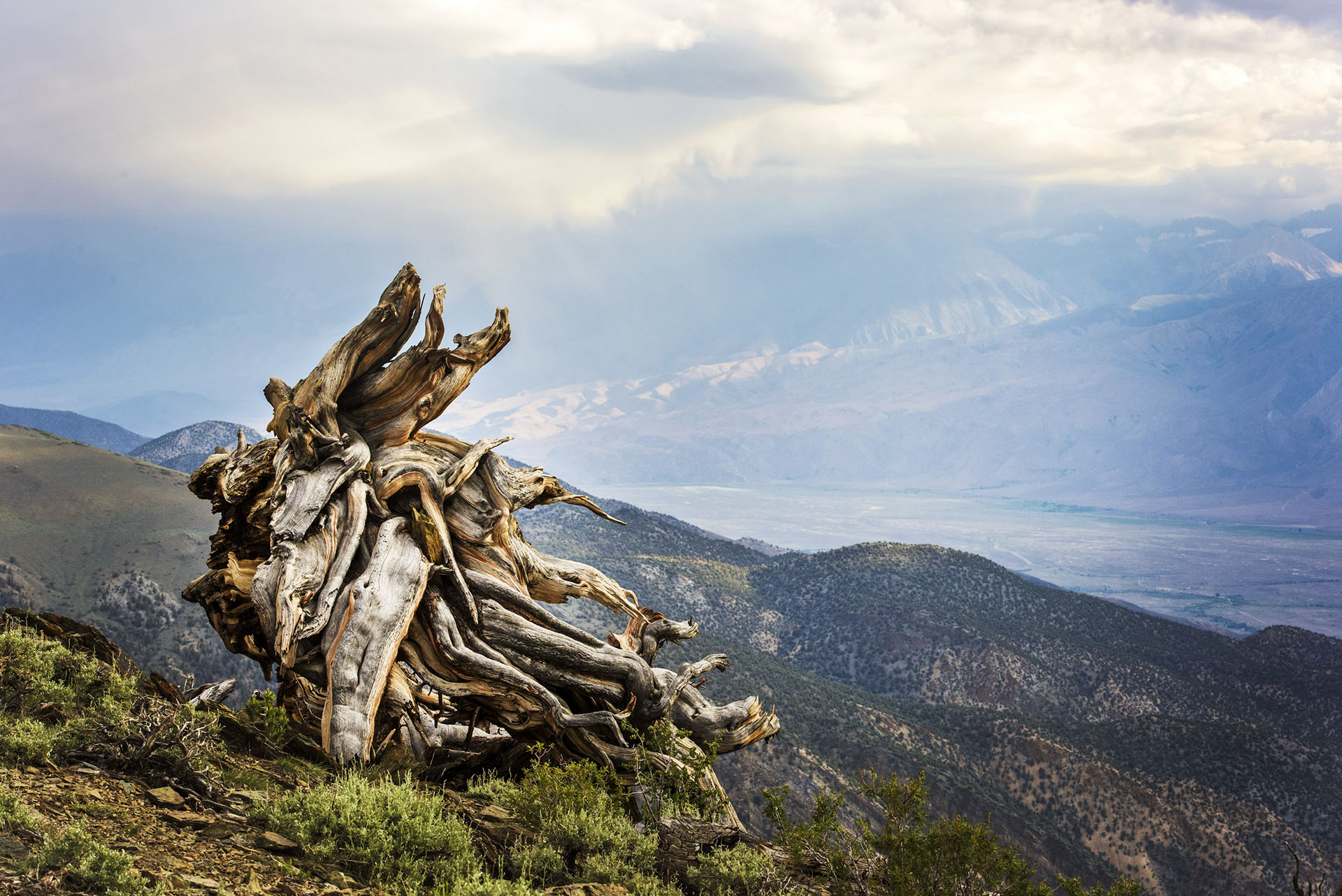 pines_06