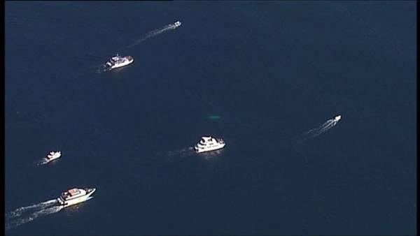 ballena-australia