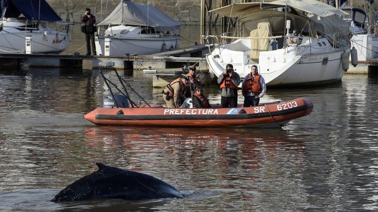 ballena puerto madero1