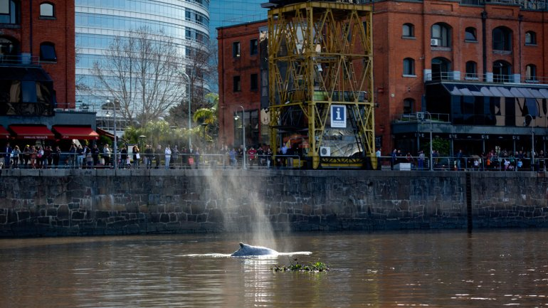ballena puerto madero2