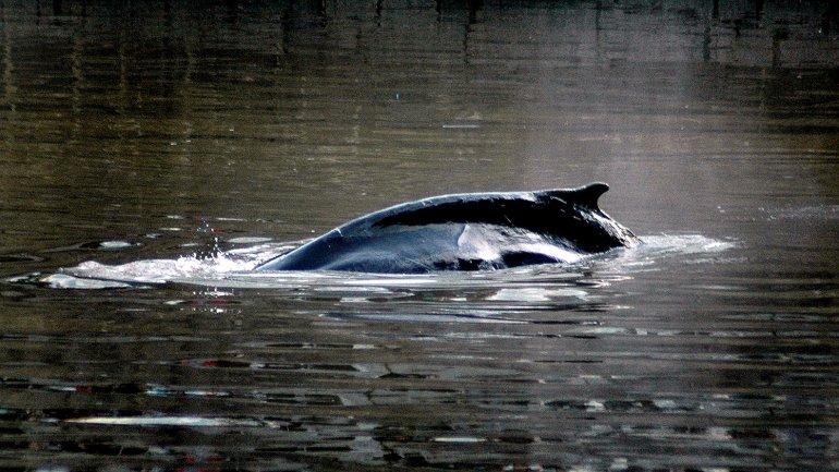 ballena puerto madero5