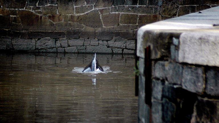 ballena puerto madero6