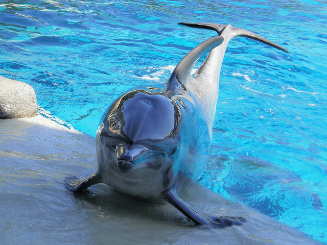 delfines7