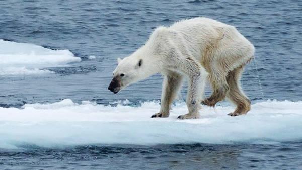 osa polar
