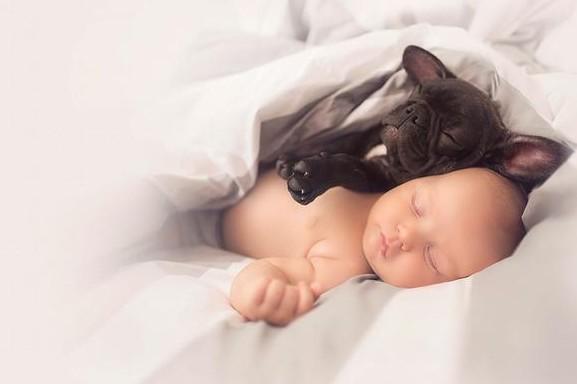 perro y bebe2