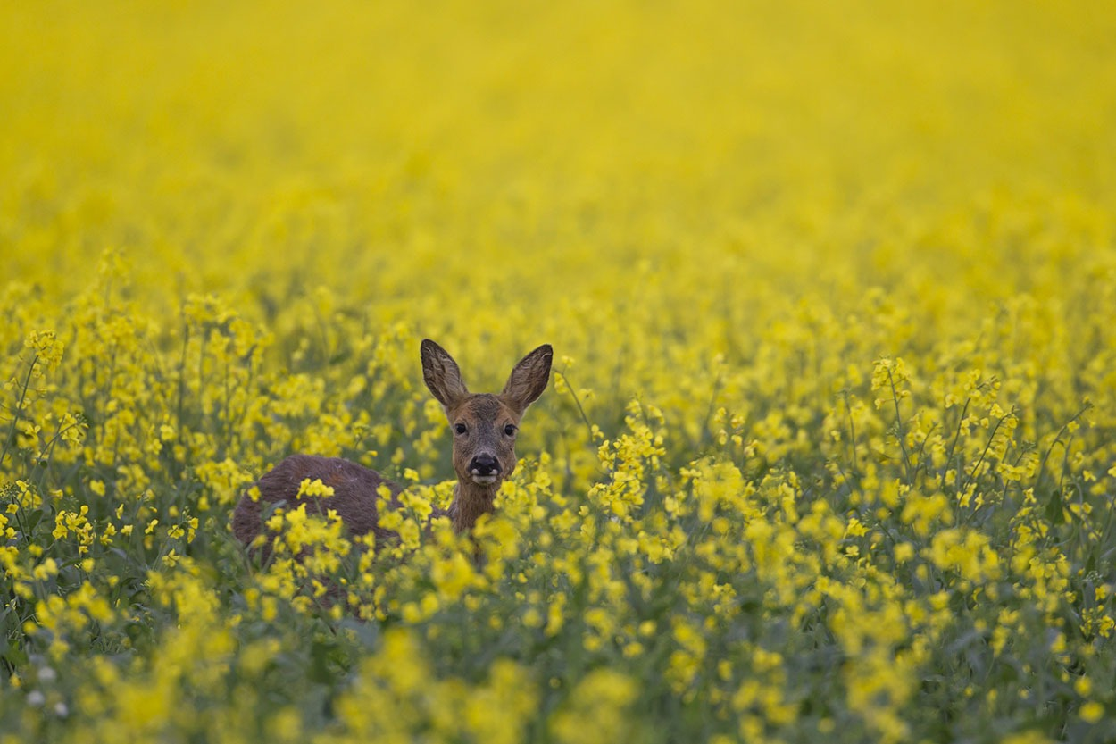 British Wildlife Photography Awards 2015 (6)