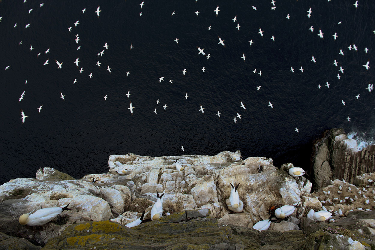 British Wildlife Photography Awards 2015 (7)