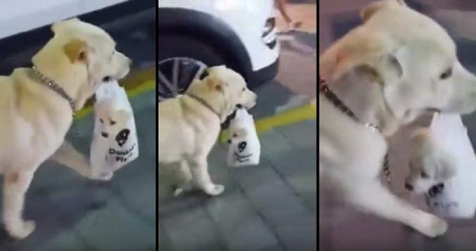 perro-bolsita