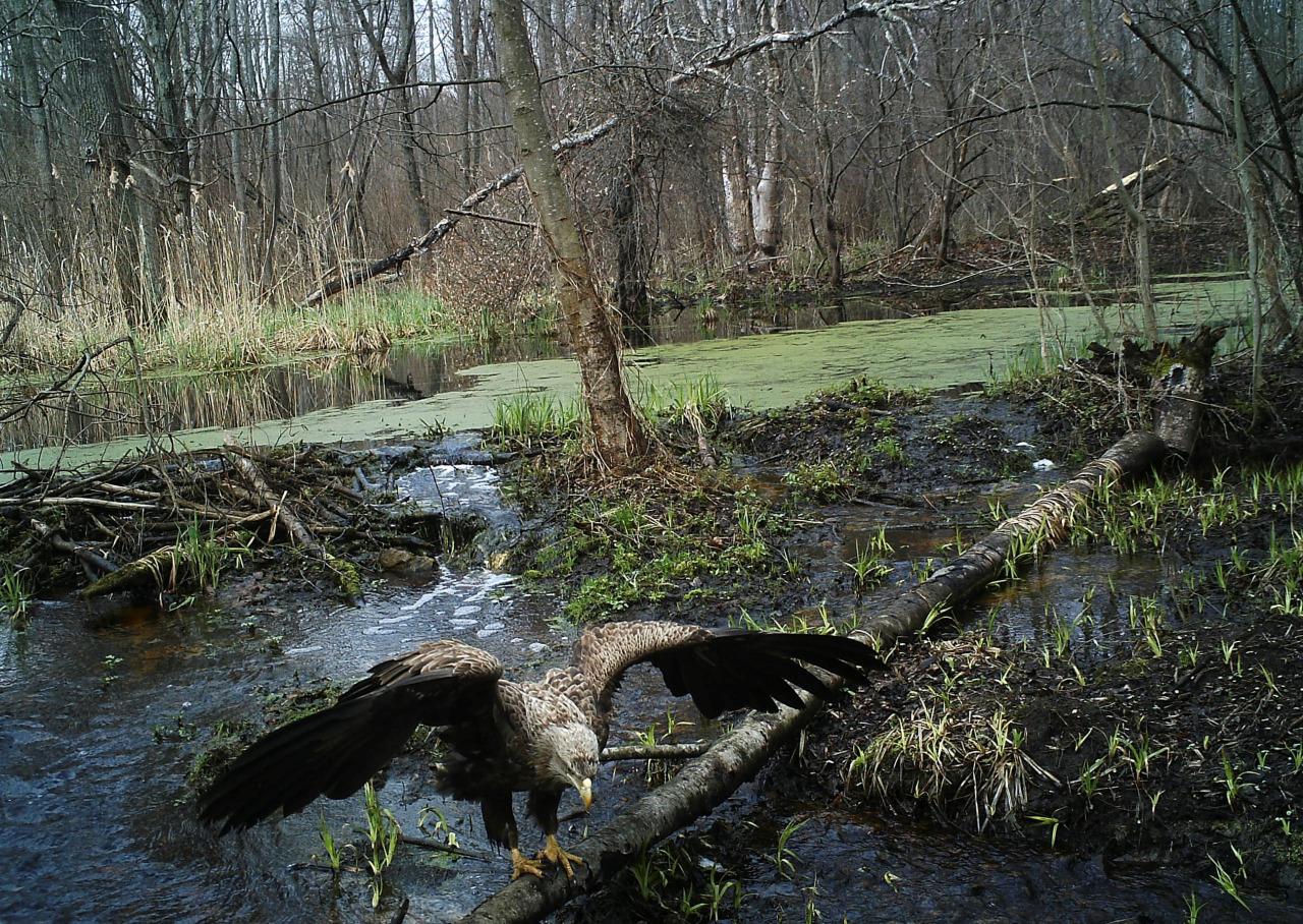 Fauna en Chernobil 1