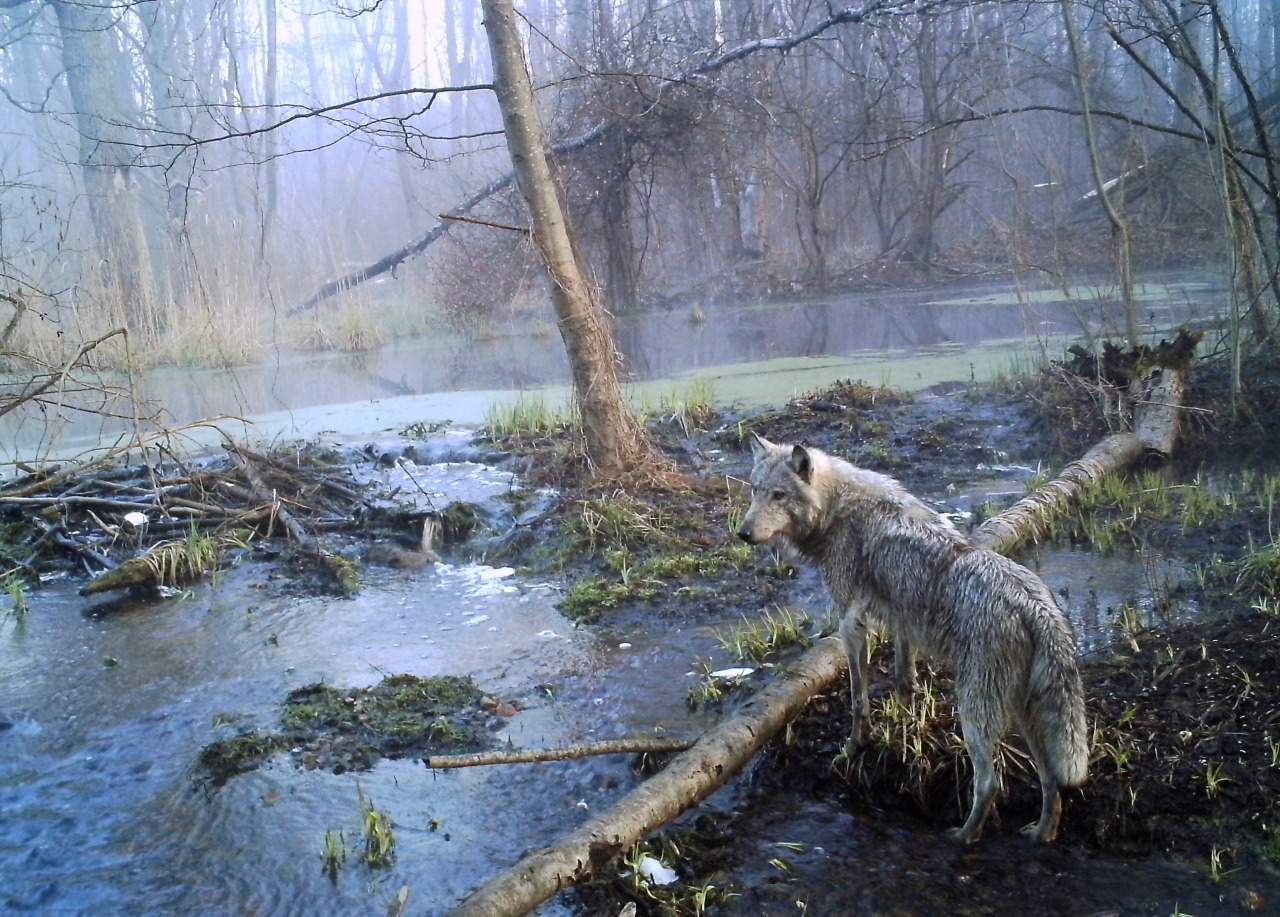Fauna en Chernobil 2