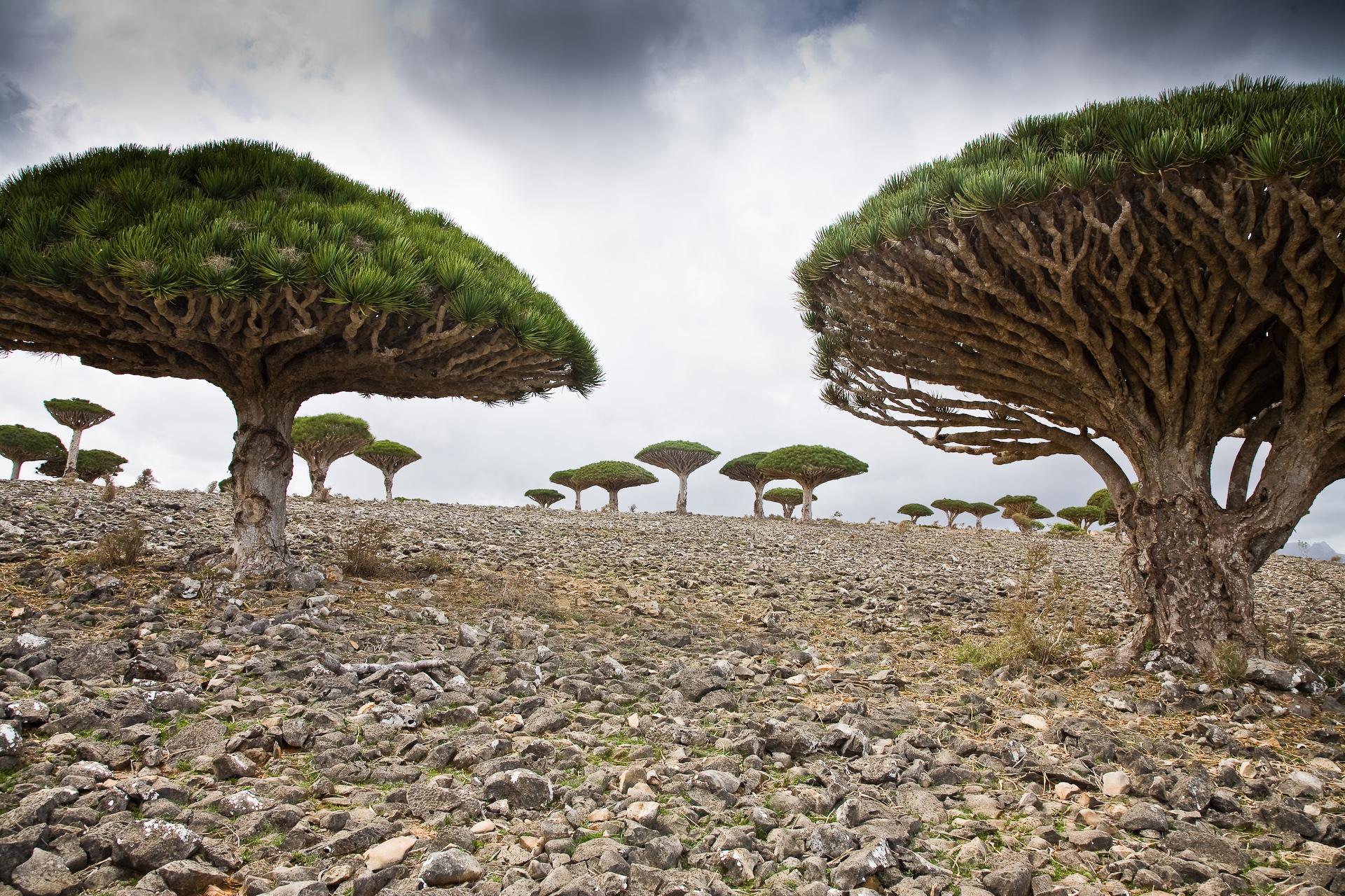 Isla de Socotra, Yemen