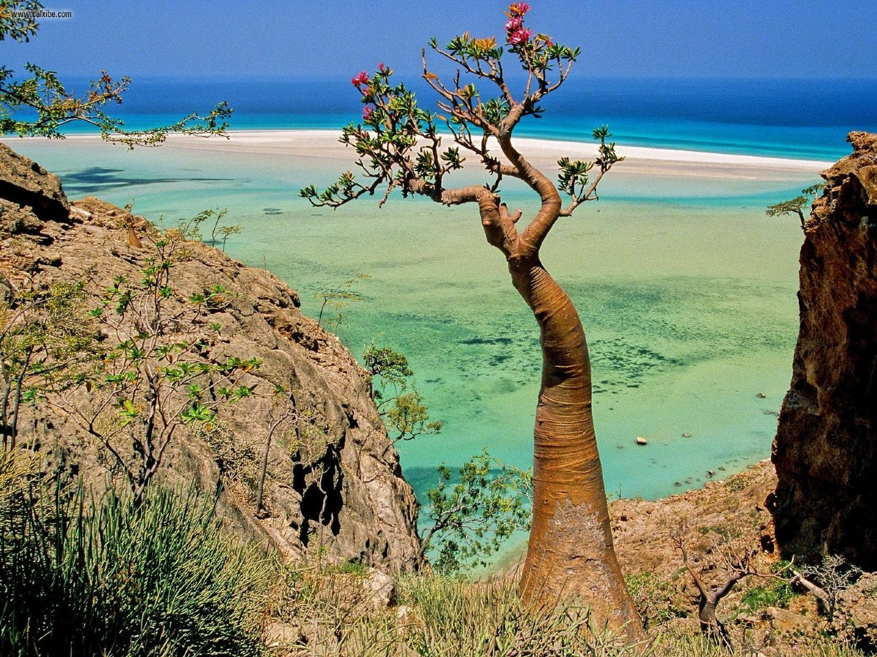 Isla Socotra 2