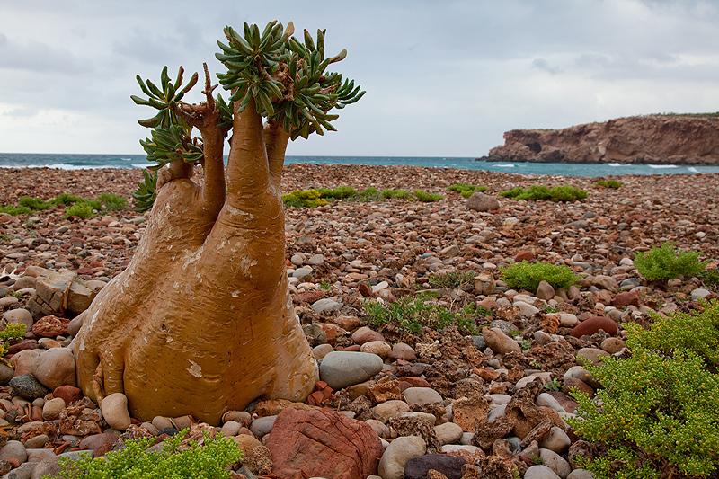 Isla Socotra 3