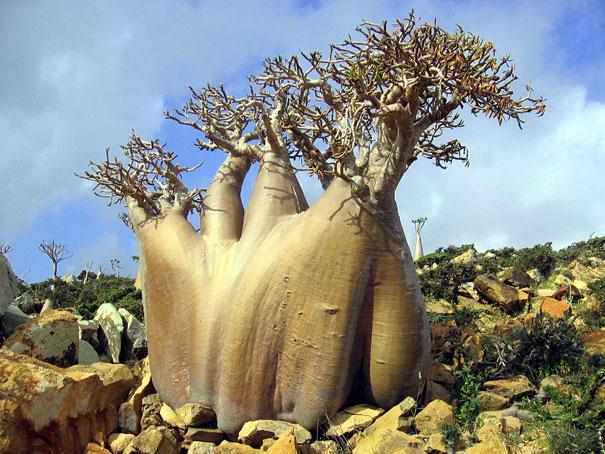 Isla Socotra 9