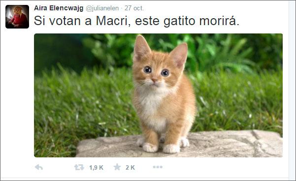 04-gatito