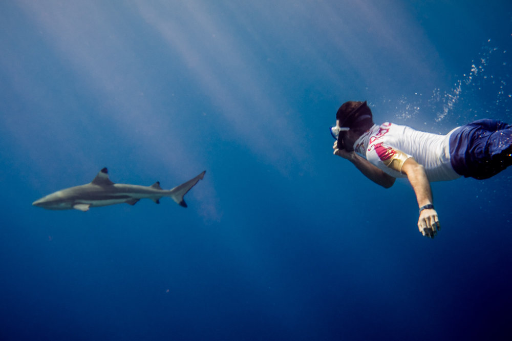 Tom's diving with sharks.