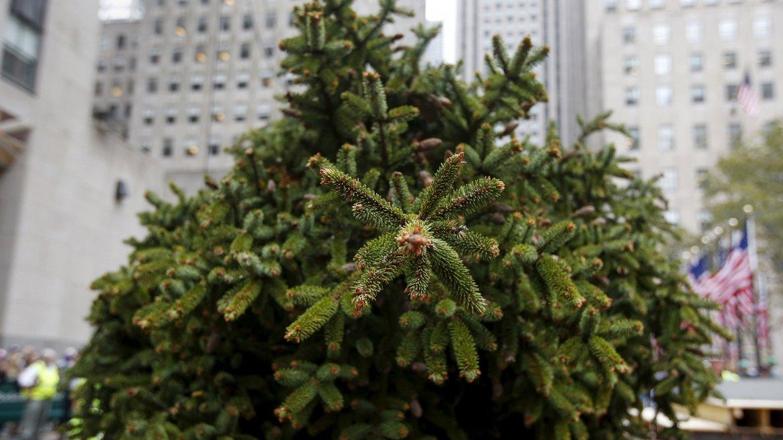 Arbol de Navidad Rockefeller Center 8