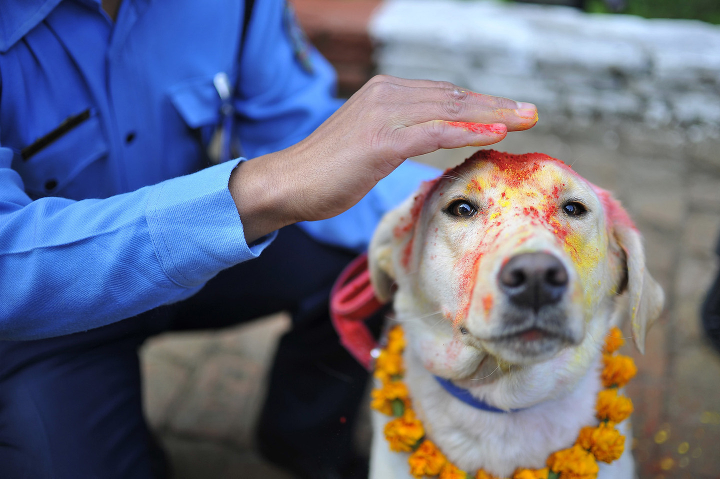 'Kukur Puja' Dog Festival Celebrates