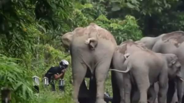 elefantes moto