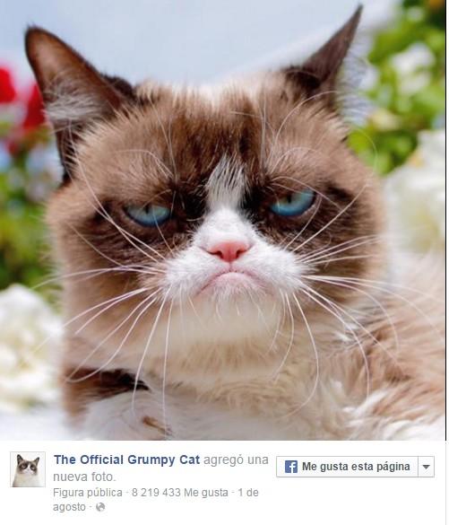 grumpy cut