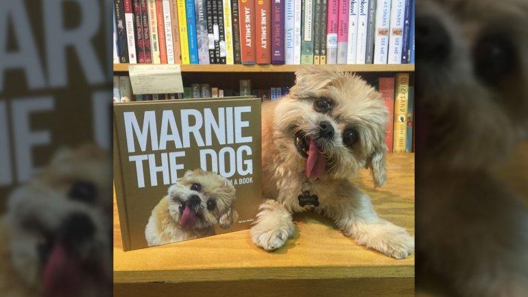 marnie dog