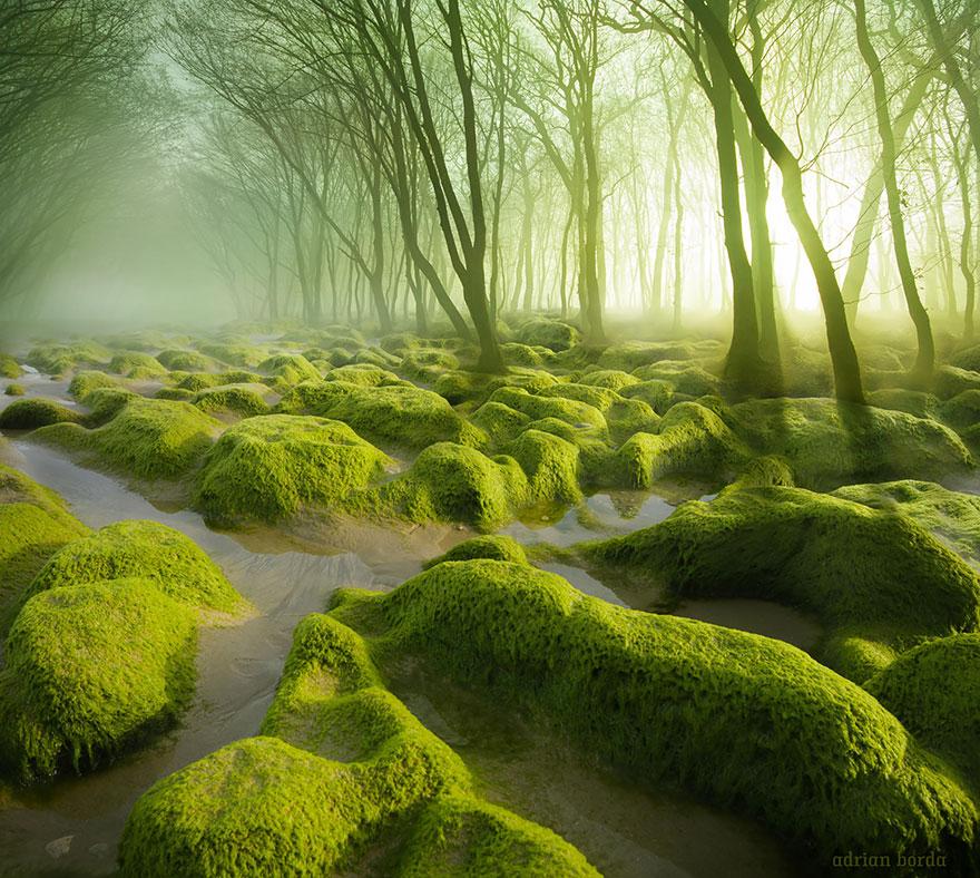 bellos-bosques-1