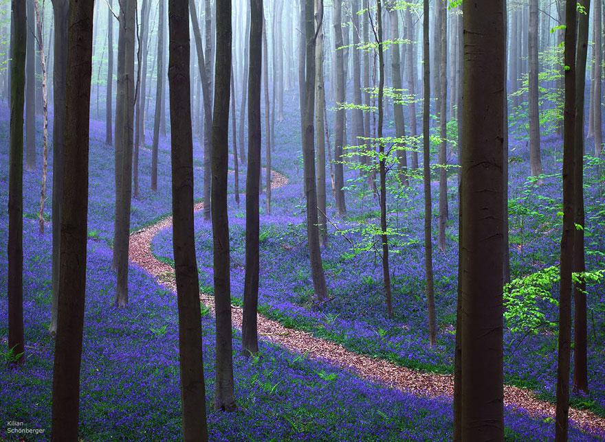 bellos-bosques-2