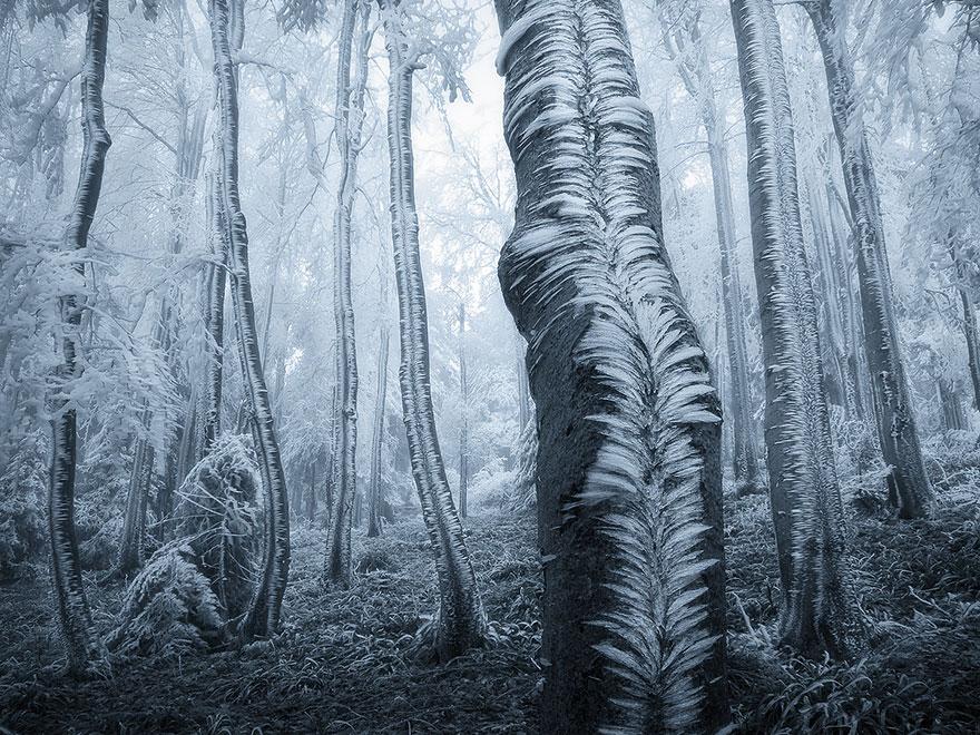 bellos-bosques-4