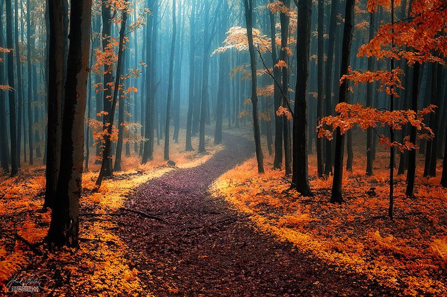 bellos-bosques-5
