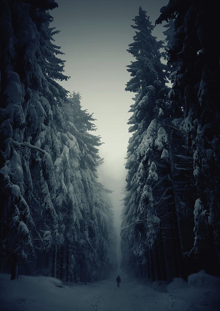 bellos-bosques-6