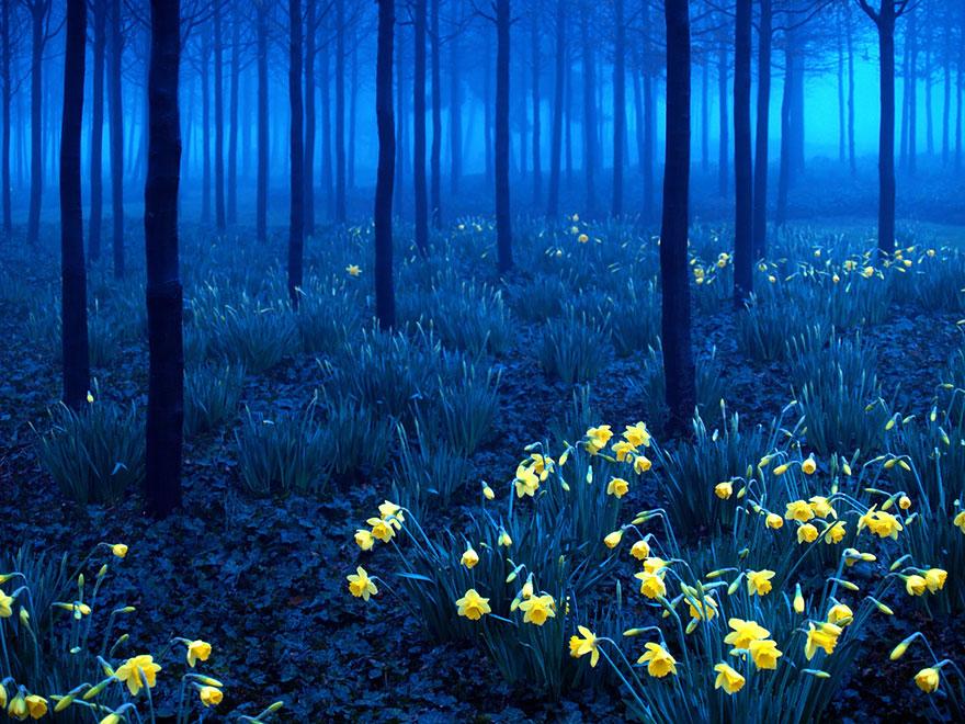bellos-bosques-7
